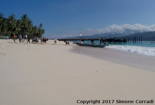 Beach Banana Island South West Sumatra