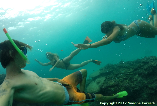 Snorkeling Banana Island South West Sumatra